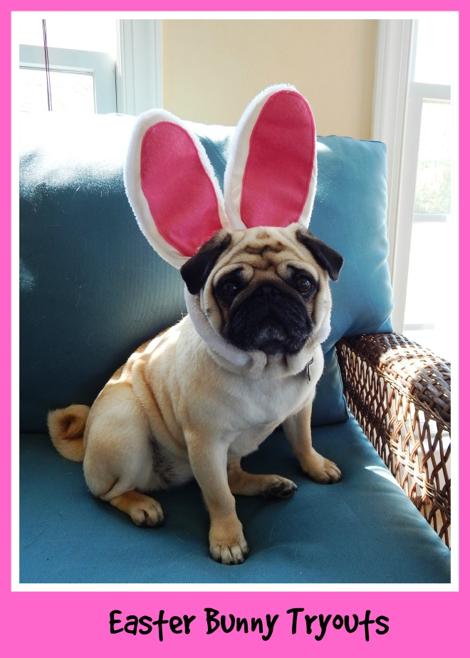 Easter Bunny Tryouts