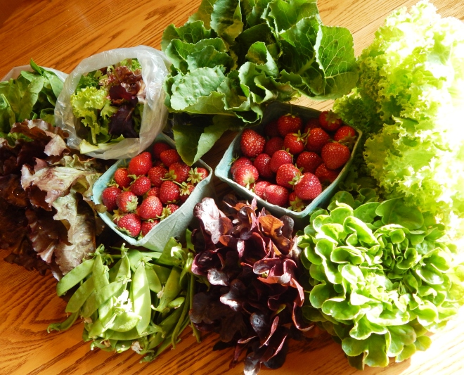 Farm Market Haul (Are You Going To Eat All of That!?)
